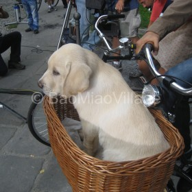 Foto del backstage durante le riprese dello spot Nescafe' con un nostro labrador del bao miao village.