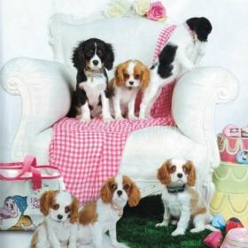 Foto per Fix Design con i cani Cavalier King del bao miao village.